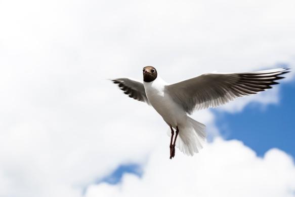 Hooverbird