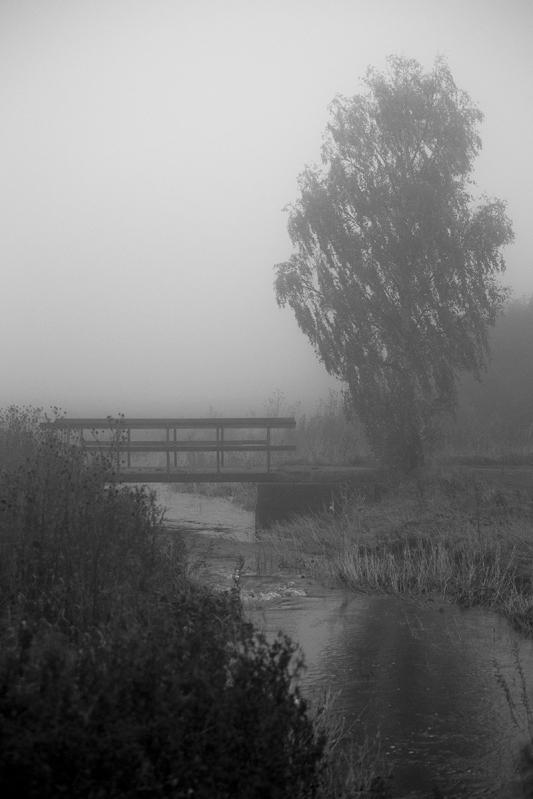 The fog III